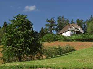 Imkereimuseum Plattner - Bienenhof
